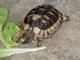 Náš život s želvičkou