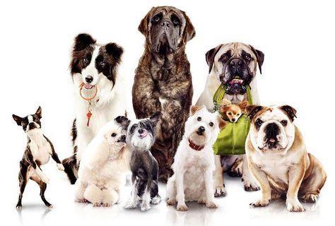 FOTKA - Rodinná komedie Hotel pro psy vyvolává poprask