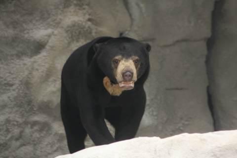FOTKA - Medvědi nevědí aneb Malajská krajina v ZOO JIHLAVA