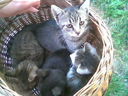 FOTKA - Pomozte nám (k)očkovat!!! aneb kočičí úhel pohledu