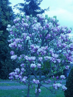 FOTKA - Květen na zahradě – jeden z nejkrásnějších měsíců v roce