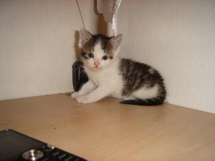 FOTKA - Naše koťátko