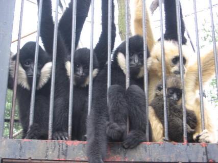 FOTKA - Zoologická zahrada