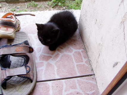 FOTKA - O nemocném kocourkovi