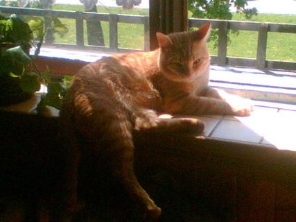 FOTKA - My a náš Garfield