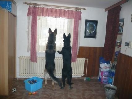 FOTKA - Mí mazlíčci