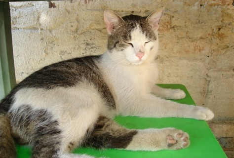 FOTKA - Jsem kočičí máma