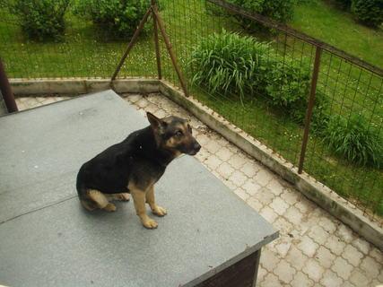 FOTKA - Když byl Deny ještě malé štěně