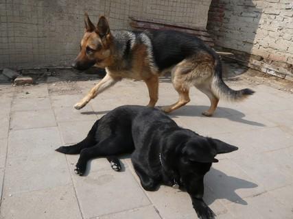 FOTKA - Ráno se psy