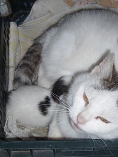 FOTKA - Trable s kotětem