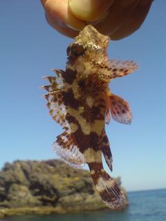 FOTKA - Kouzelná rybka