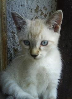 FOTKA - Učení koťátek