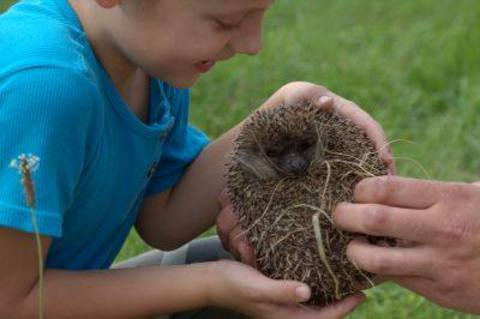 FOTKA - Vypuštění ježků do volné přírody