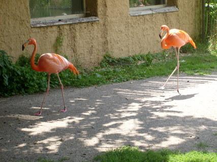 FOTKA - Návštěva zoologické zahrady