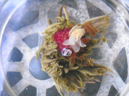 FOTKA - Novinkou poslední doby je kvetoucí čaj