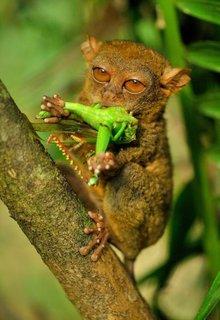 FOTKA - Projekt Tarsius – za nártouny do filipínské džungle