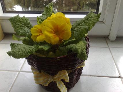 FOTKA - Vyrob si sama - Ruličky, květináč, košíček