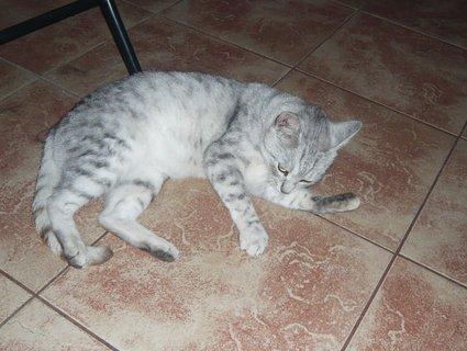 FOTKA - Nejčastější onemocnění koček a jejich léčba