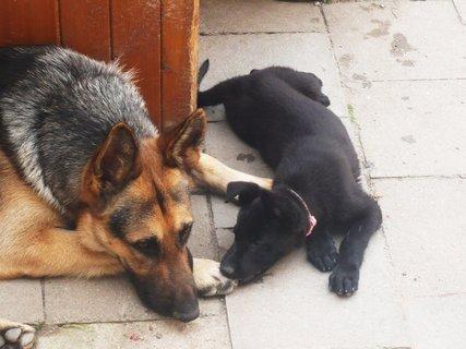 FOTKA - Základní typy a chování psů