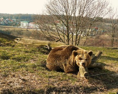 FOTKA - Kladno s medvědáriem