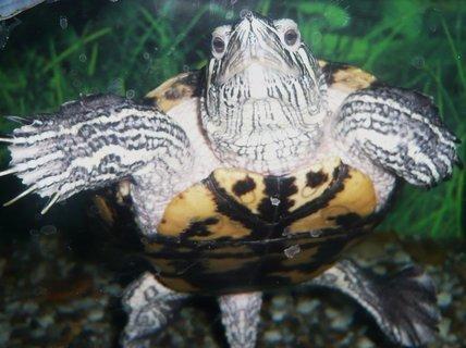 FOTKA - Chováme doma želvu