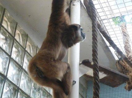 FOTKA - Chov�me doma opici