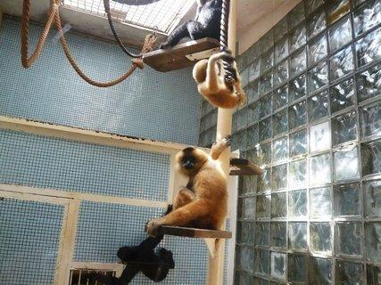 FOTKA - Chováme doma opici