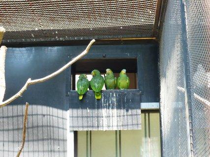 FOTKA - Mluva ptáků