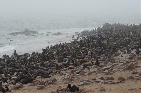 FOTKA - Na cest� po z�padn� Namibii