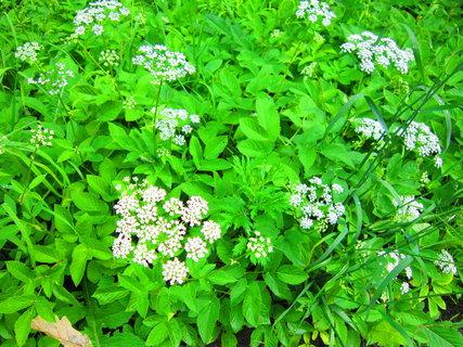 FOTKA - Prapodivná moc rostlin