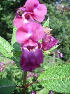 FOTKA - Poplach v botanické zahradě
