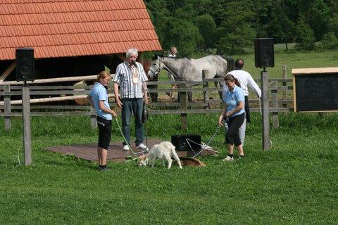 FOTKA - Zvířata zvyšují dětem sebevědomí a pomáhají jim k samostatnosti!