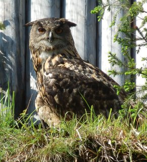 FOTKA - Nový sovinec v Borových Ladech