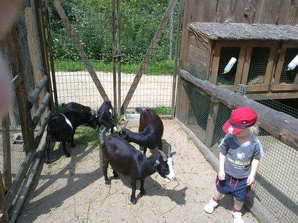 FOTKA - Náš výlet do zooparku Zájezd aneb příjemně strávené odpoledne kousek od Prahy
