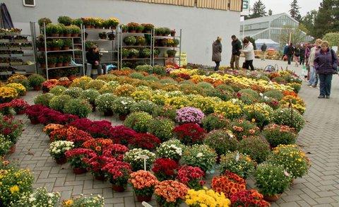 FOTKA - Podzimní Flora Olomouc 2013