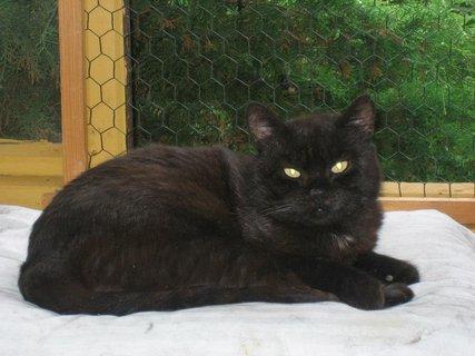 FOTKA - Eda - kocour s duší kotěte
