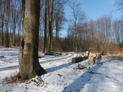 FOTKA - Penčický okruh - procházka lesní stezkou