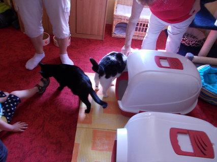 FOTKA - Srdcem pro kočky očima návštěvníka