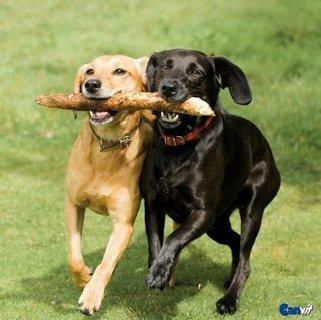 FOTKA - Vitamíny pro psy a kočky: Kdy, proč a jak vybírat?
