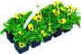 Podzimní výsadba jarních rostlin