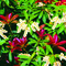 Podzimní péče o keře a trvalky