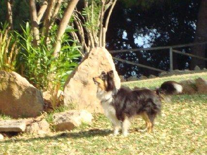 FOTKA - Neúspěšný hon na vychytralé veverky