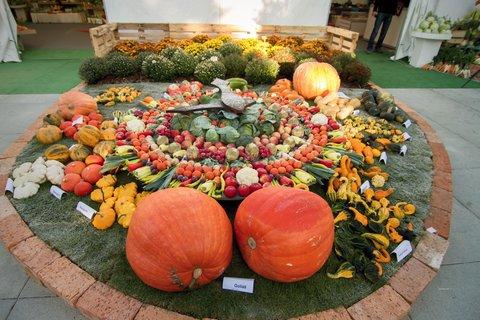 FOTKA - Podzimní Flora Olomouc 2014 chystá lákadla pro malé i velké návštěvníky