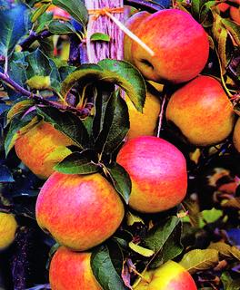 FOTKA - Uskladnění ovoce a zeleniny