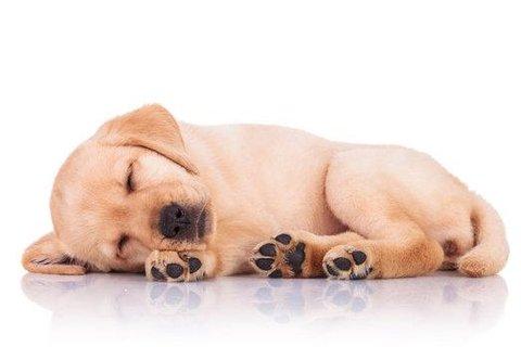 FOTKA - 5 rad jak se nejlépe postarat o štěně