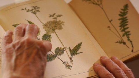 FOTKA - Kouzelné bylinky - Síla z přírody