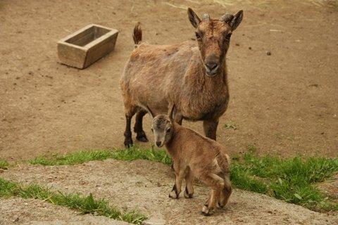 FOTKA - Přijďte se podívat na vzácná mláďata do ZOO Liberec