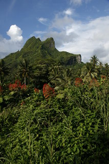 FOTKA - Na cestě po Bora Bora