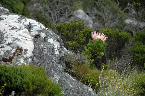 FOTKA - Na cestě po západním Kapsku