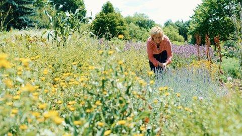 FOTKA - Kouzelné bylinky - Kyselo, aby bylo veselo